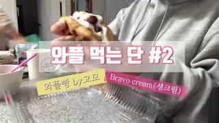[단단] 와플 먹는 단#2 /와플 만들기/휘핑크림 생크…