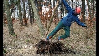 Extrem gefährlich! Hängenden Baum fällen! Nie wieder auf diese Art!