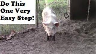 How To Make Your Pork Taste Better Before Porocessing