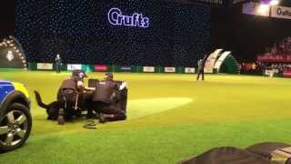 Julius-k9® In Action At Crufts Dog Show