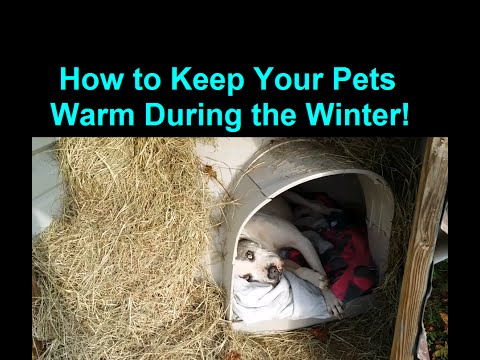 how-to-keep-a-dog-warm-during-winter-cold-weather---warm-dog-house