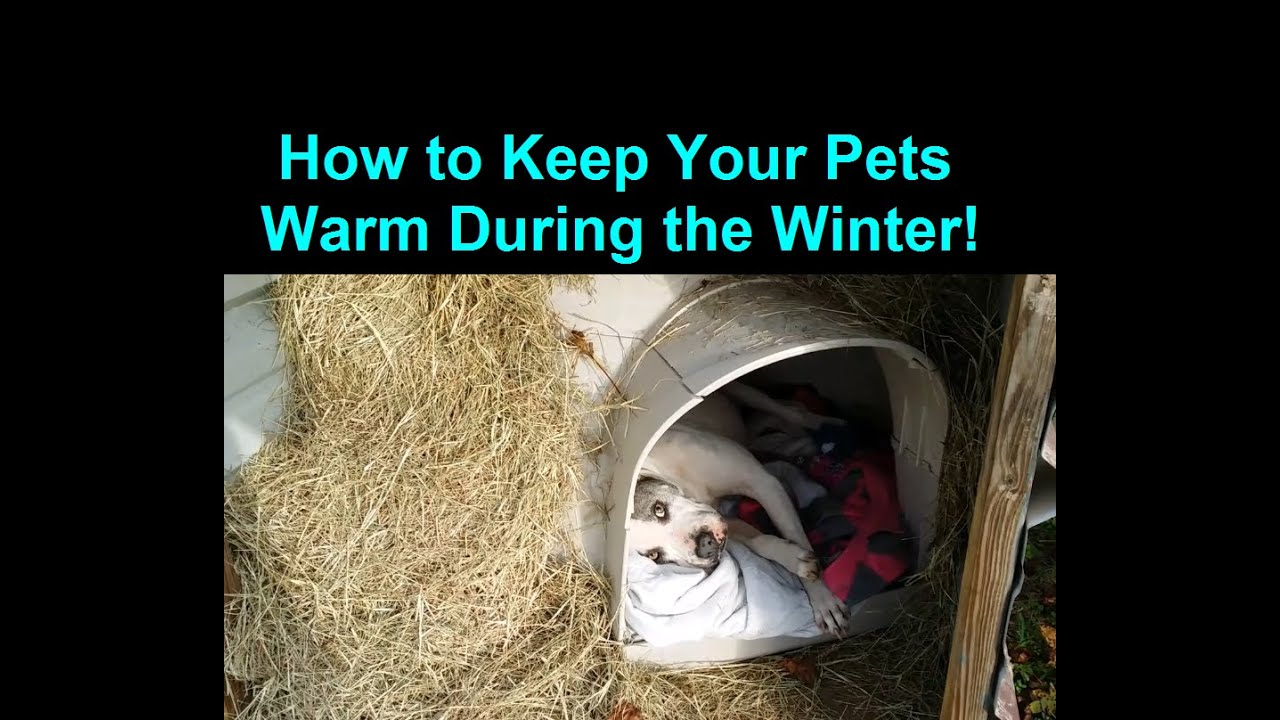how to keep a dog warm during winter cold weather warm dog house youtube
