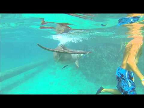 Snorkeling @ Dolphin Academy Curaçao