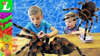 bad baby дети против паука giant spider vs girl boy freaky mommy toy freaks kids hidden egg