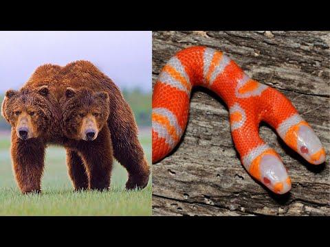 10 Weird Two Headed Animals