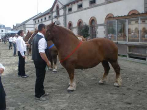 cheval de trait le bon coin