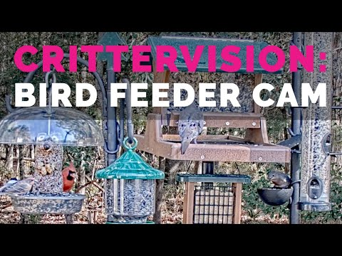 CritterVision Bird Feeder Cam: 24/7 Live Songbird, Wildlife And Nature-Viewing Cam!