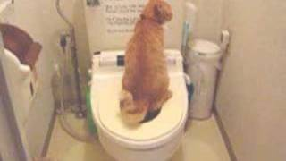 Toilet trained cat, Fu