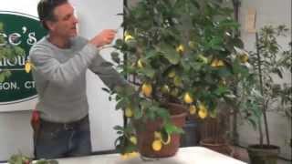 Meyer Lemon Workshop Excerpt