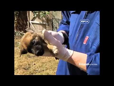 RSPCA video: Three jailed after puppies found buried alive in garden