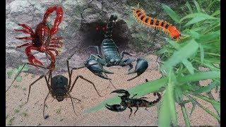 Hành Trình Truy Bắt Bọ Cạp Núi Dưới Lòng Đất Và Phát Hiện Bất Ngờ .Đi Bắt Bọ Cạp .Catch The Scorpion