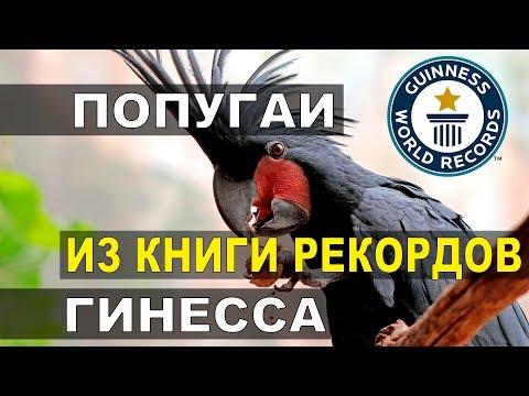 Вопрос: Как называются самые умные и разговорчивые попугаи?