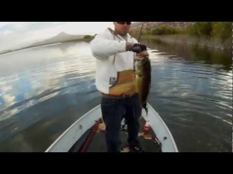 Lake perris swimbait fishing youtube for Lake perris fishing report