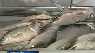 В хозяйстве имени Мирошниченко у рыб выявили опасное заболевание