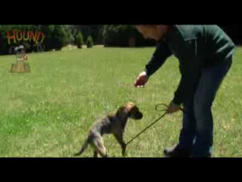 Sidney Aarons Dog Training