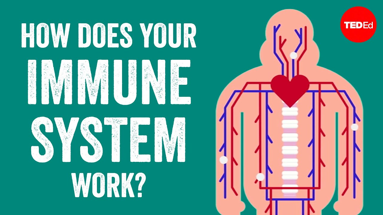 Two Great Videos Explaining How Our Immune System Works and How To Boost It