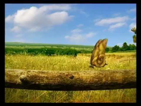 Youtube filmek - Csodabogarak - Csigaháztalan (2.évad 2.rész)