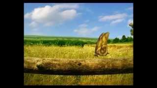 Csodabogarak - Csigaháztalan (2.évad 2.rész)