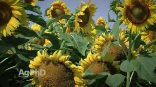 Sunflower Production #988 (Air Date 3-12-17)