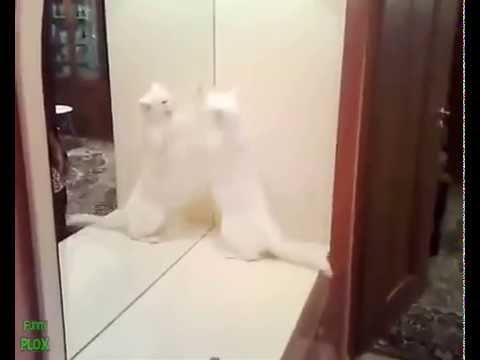 Migliori Video Di Gatti E Cani Divertenti E Pazzi Che Giocano Allo