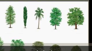 आम के पेड़ के प्रकार
