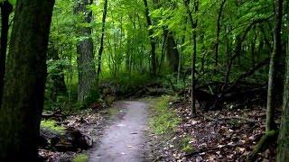 Relaxing Rainforest Sounds Light Rain Beautiful Scenic