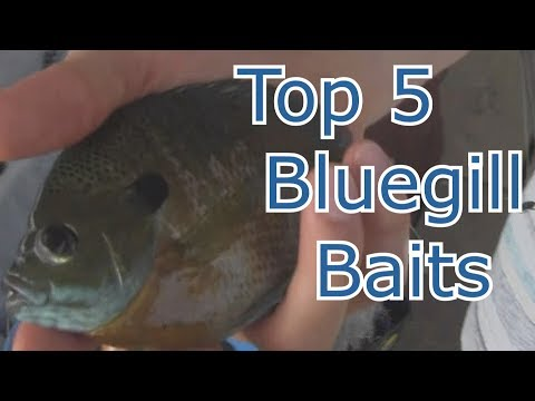 Best 5 Baits For Bluegill And Panfish - Tips And Techniques