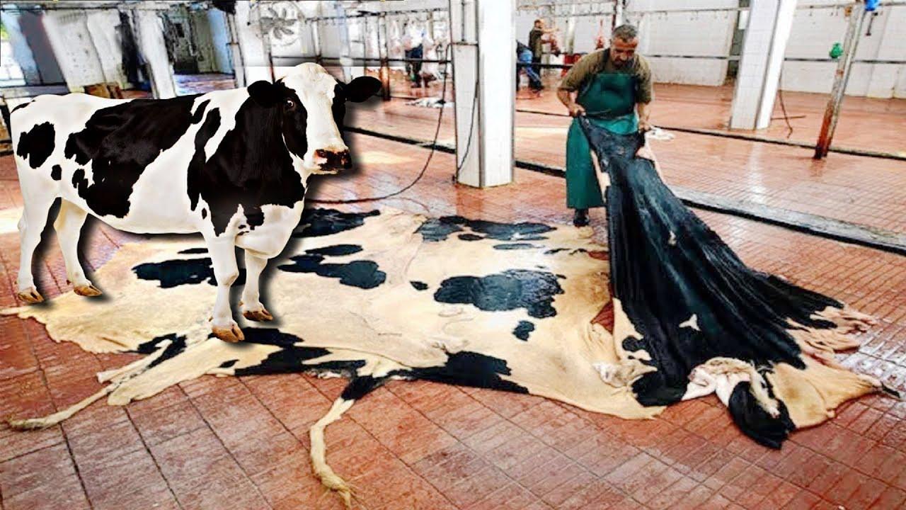 দেখুন ফ্যাক্টরিতে গরুগুলো সাথে কি হয়, চামড়া গুলো কি করছে    Amazing automatic cow farming factory