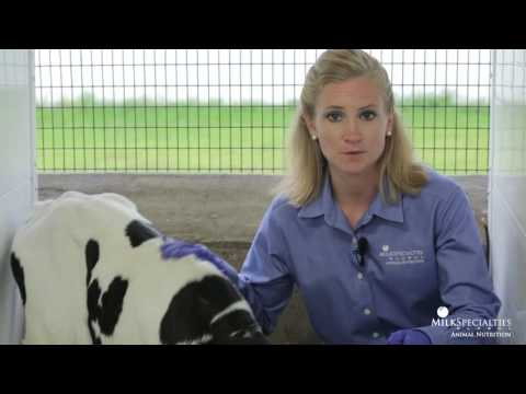 Calf Management Tips: Dehydration Evaluation
