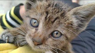 Rescued Abandoned Kitten Seeking For Love    Adorable Kitten Cute Meowing Is Heart Melting