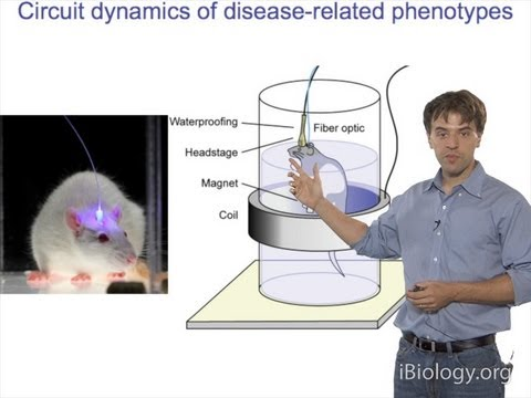 Microscopy: Optogenetics (Karl Deisseroth)