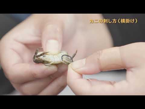 釣りエサの針への付け方 カニ