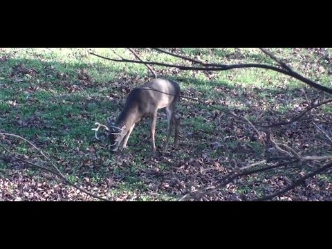This One Tip Can Keep More Deer on Your Property
