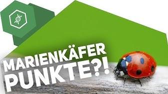 Was sollen die Punkte auf dem Marienkäfer?! ● Gehe auf SIMPLECLUB.DE/GO & werde #EinserSchüler