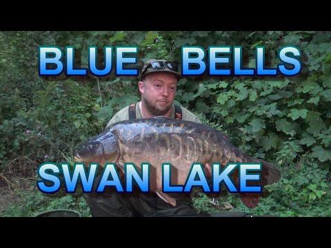 Bluebells Swan Lake Carp Fishing