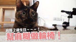 麻糊2歲生日禮物!幫麻糊做輪椅!【好味貓開箱】EP10 thumbnail