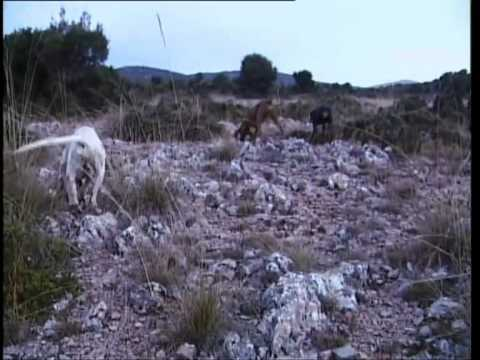 Traditional Hare Hunting in Greece. A TS TV Production