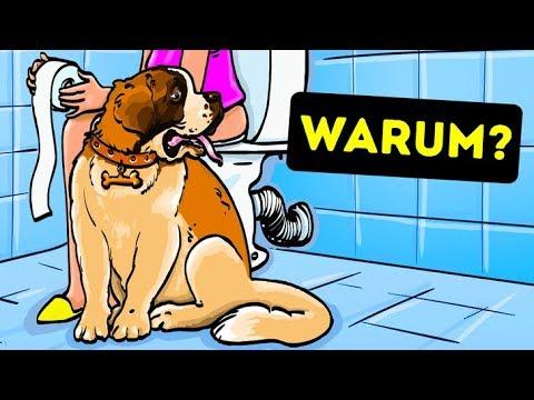 Warum dein Hund dir ins Badezimmer folgt
