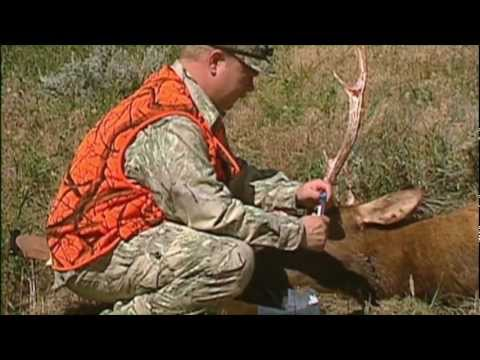 Alberta:Mule Deer - Episode 3 - Boone and Crockett Country