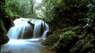 My Soul Music Video - Rainforests