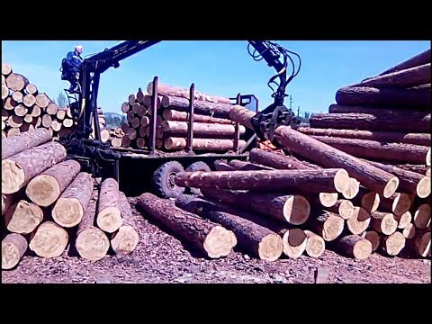 Sorting of wood (logs) at the sawmill /  KAMAZ sorts wood / RussianBlog-38