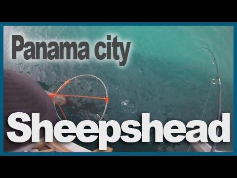 Panama City Pier - Sheepshead Fishing