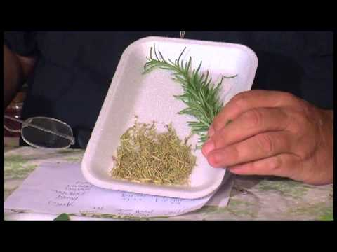 Herbs for Everyday Living: Parsley, Sage, Rosemary, Thyme