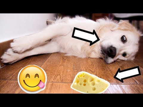 The Best Way To Wake Up A Golden Retriever Dog