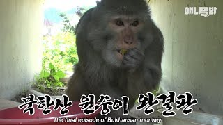 The story of the monkey wandering around Bukhan mountain for 5 months... has come to an end!
