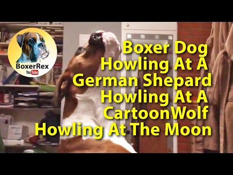 Boxer Dog Howling At German Shepard Dog Howling At A Cartoon Wolf Howling At The Moon 😂😂😂💻🐕