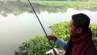 Rampage with Rohu - Angling in Bangladesh