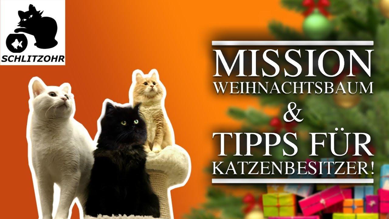 mission weihnachtsbaum weihnachtsbaum tipps f r. Black Bedroom Furniture Sets. Home Design Ideas