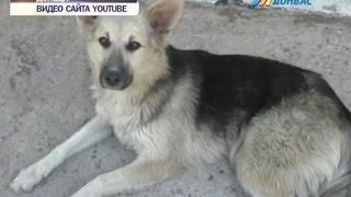 Волонтеры ищут хозяев для собак из донецкого приюта