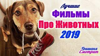 ФИЛЬМЫ ПРО ЖИВОТНЫХ 2019 ГОДА. 6 ЛУЧШИХ. Приключения 2019 года